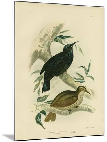 Rifle-Bird, 1891-Gracius Broinowski-Mounted Giclee Print