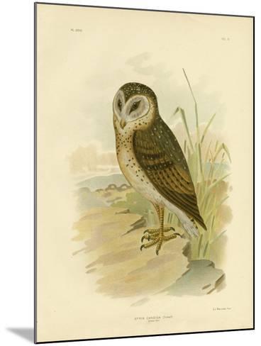 Grass Owl, 1891-Gracius Broinowski-Mounted Giclee Print
