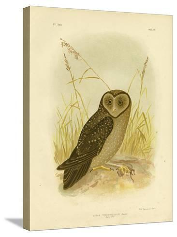 Sooty Owl, 1891-Gracius Broinowski-Stretched Canvas Print