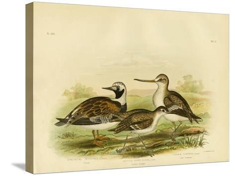 Turnstone, 1891-Gracius Broinowski-Stretched Canvas Print