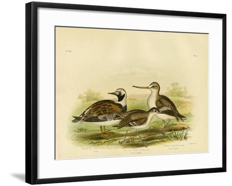 Turnstone, 1891-Gracius Broinowski-Framed Art Print