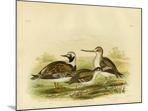 Turnstone, 1891-Gracius Broinowski-Mounted Giclee Print