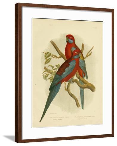 Pennants Parakeet or Crimson Rosella, 1891-Gracius Broinowski-Framed Art Print