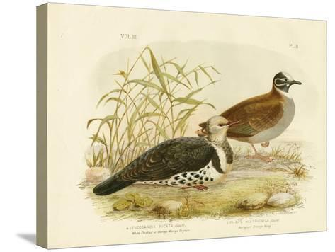 White-Fleshed Pigeon or Wonga Pigeon, 1891-Gracius Broinowski-Stretched Canvas Print