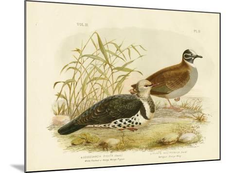 White-Fleshed Pigeon or Wonga Pigeon, 1891-Gracius Broinowski-Mounted Giclee Print