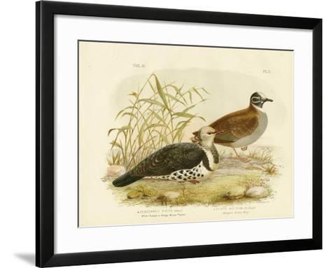 White-Fleshed Pigeon or Wonga Pigeon, 1891-Gracius Broinowski-Framed Art Print