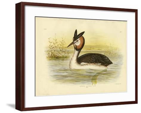 Great Crested Grebe, 1891-Gracius Broinowski-Framed Art Print