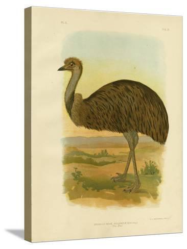 Emu, 1891-Gracius Broinowski-Stretched Canvas Print