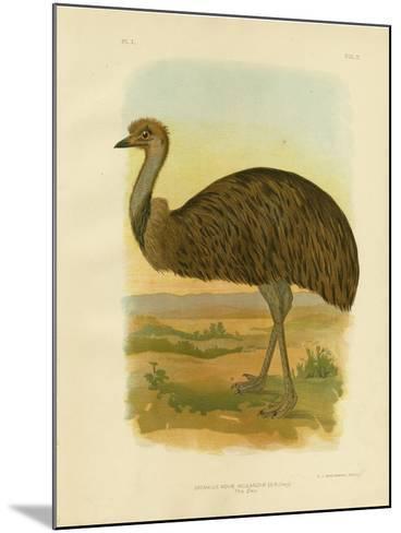 Emu, 1891-Gracius Broinowski-Mounted Giclee Print