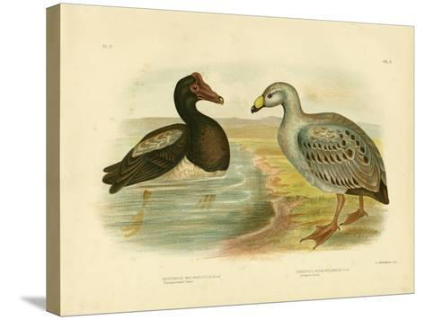 Semipalmated Goose or Magpie Goose, 1891-Gracius Broinowski-Stretched Canvas Print