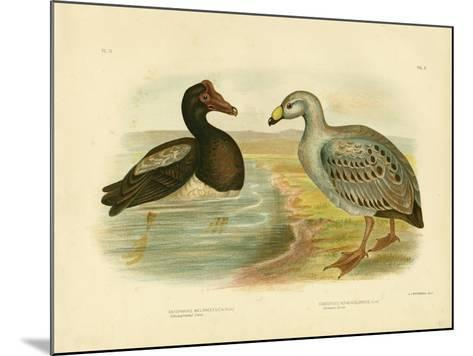 Semipalmated Goose or Magpie Goose, 1891-Gracius Broinowski-Mounted Giclee Print