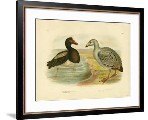 Semipalmated Goose or Magpie Goose, 1891-Gracius Broinowski-Framed Art Print