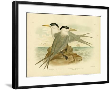 Torres Straits Tern, 1891-Gracius Broinowski-Framed Art Print