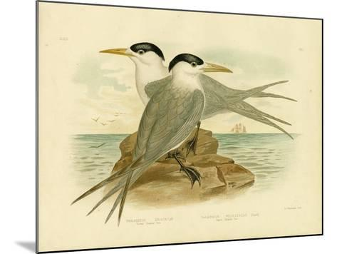 Torres Straits Tern, 1891-Gracius Broinowski-Mounted Giclee Print