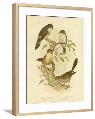White-Bellied Robin, 1891-Gracius Broinowski-Framed Art Print