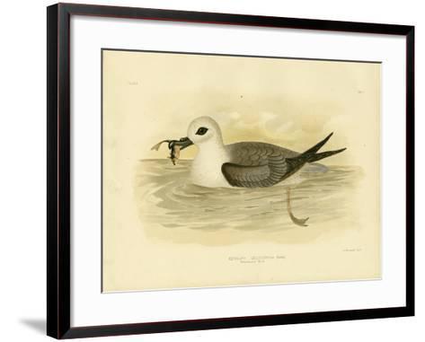 White-Headed Petrel, 1891-Gracius Broinowski-Framed Art Print