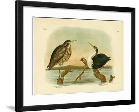 Australian Bittern, 1891-Gracius Broinowski-Framed Art Print