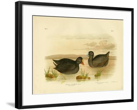Sombre Gallinule or Dusky Moorhen, 1891-Gracius Broinowski-Framed Art Print