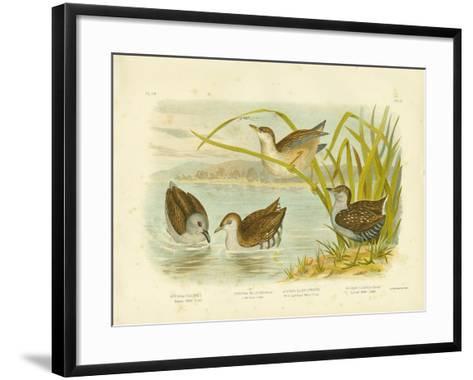 Tabuan Water Crake or Sooty Crake, 1891-Gracius Broinowski-Framed Art Print