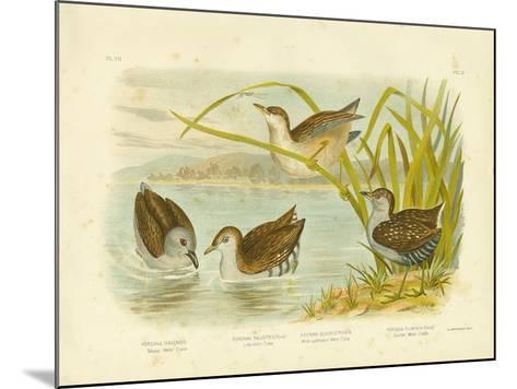 Tabuan Water Crake or Sooty Crake, 1891-Gracius Broinowski-Mounted Giclee Print