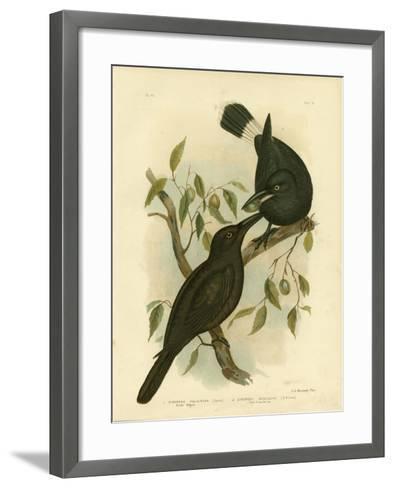 Black Magpie or Black Currawong, 1891-Gracius Broinowski-Framed Art Print
