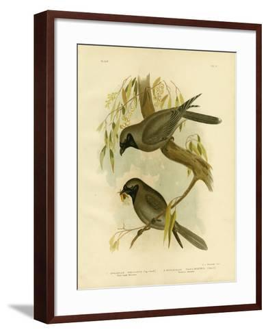 Black-Faced Shrike, 1891-Gracius Broinowski-Framed Art Print