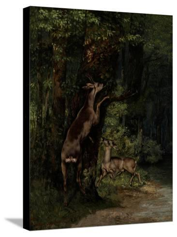 Deer in the Forest, 1868-Gustave Courbet-Stretched Canvas Print