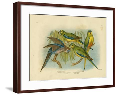 Orange-Bellied Grass-Parakeet, 1891-Gracius Broinowski-Framed Art Print