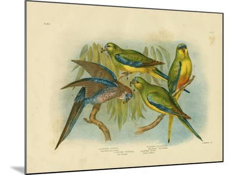 Orange-Bellied Grass-Parakeet, 1891-Gracius Broinowski-Mounted Giclee Print
