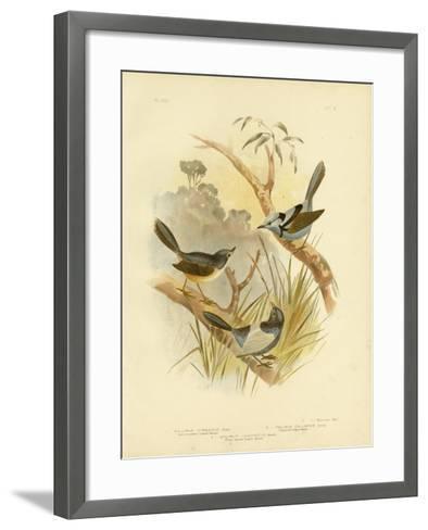 Fawn-Breasted Superb Warbler, 1891-Gracius Broinowski-Framed Art Print