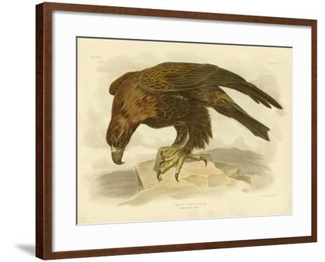 Wedge-Tailed Eagle, 1891-Gracius Broinowski-Framed Art Print