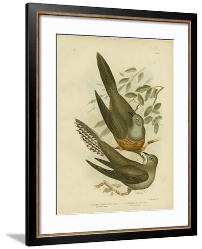 Australian Cuckoo, 1891-Gracius Broinowski-Framed Art Print