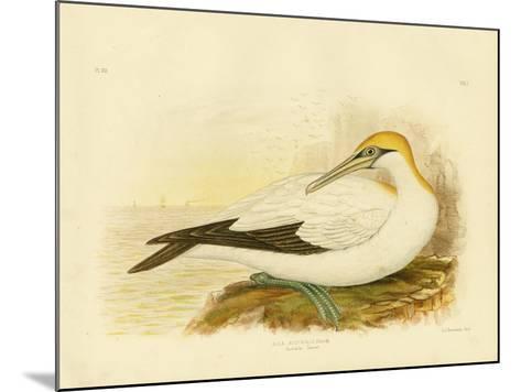 Australian Gannet, 1891-Gracius Broinowski-Mounted Giclee Print