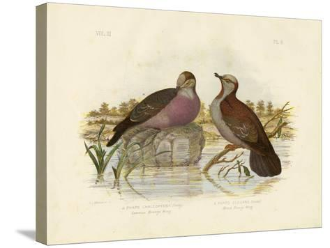 Common Bronzewing, 1891-Gracius Broinowski-Stretched Canvas Print