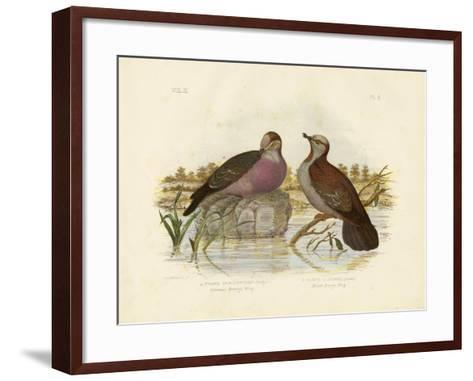 Common Bronzewing, 1891-Gracius Broinowski-Framed Art Print