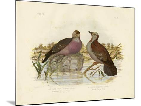 Common Bronzewing, 1891-Gracius Broinowski-Mounted Giclee Print