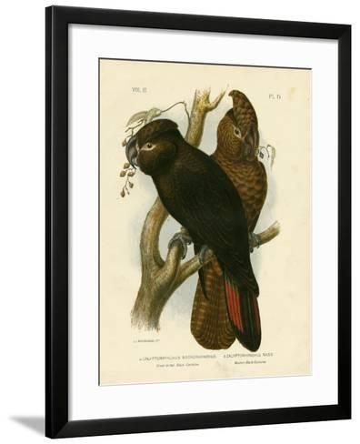 Great-Billed Black Cockatoo, 1891-Gracius Broinowski-Framed Art Print