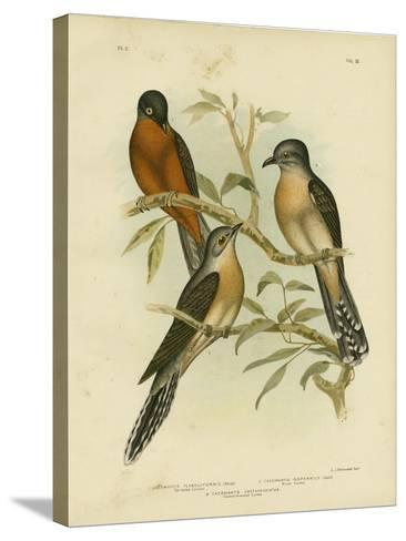 Fan-Tailed Cuckoo, 1891-Gracius Broinowski-Stretched Canvas Print