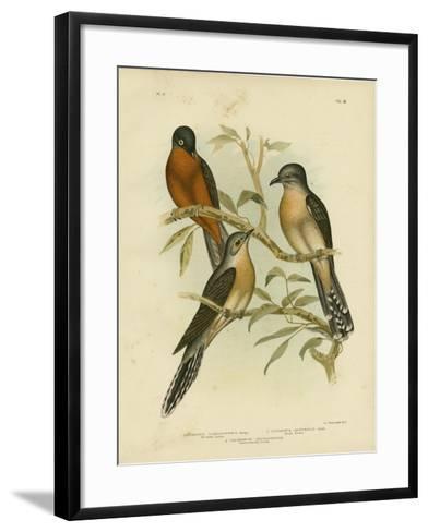 Fan-Tailed Cuckoo, 1891-Gracius Broinowski-Framed Art Print