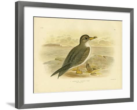 Great Grey Petrel, 1891-Gracius Broinowski-Framed Art Print