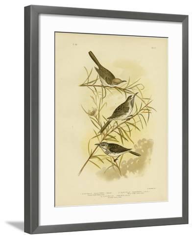Fulvous-Fronted Honeyeater, 1891-Gracius Broinowski-Framed Art Print