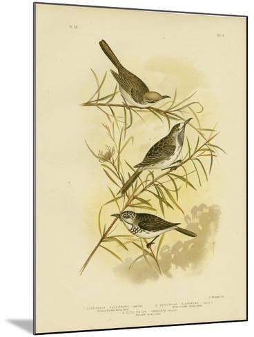 Fulvous-Fronted Honeyeater, 1891-Gracius Broinowski-Mounted Giclee Print