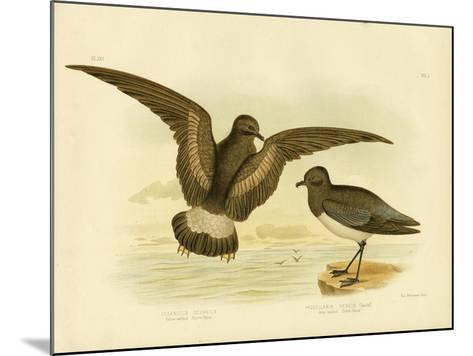 Yellow-Webbed Storm Petrel, 1891-Gracius Broinowski-Mounted Giclee Print