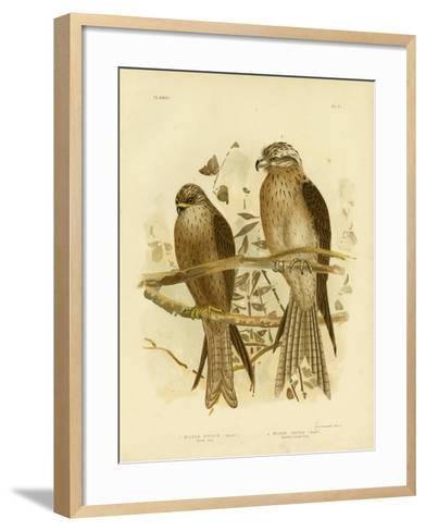 Allied Kite or Black Kite, 1891-Gracius Broinowski-Framed Art Print