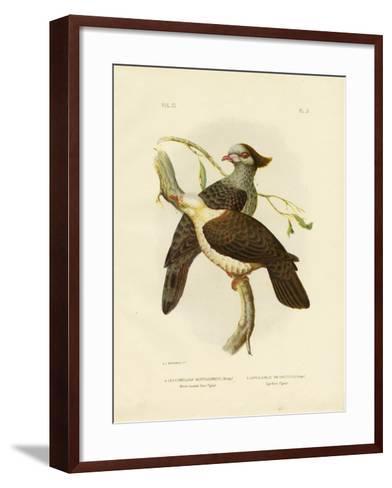 White-Headed Fruit Pigeon, 1891-Gracius Broinowski-Framed Art Print