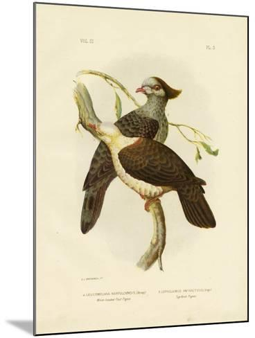 White-Headed Fruit Pigeon, 1891-Gracius Broinowski-Mounted Giclee Print