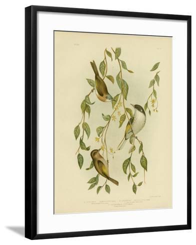 White-Throated Honeyeater, 1891-Gracius Broinowski-Framed Art Print