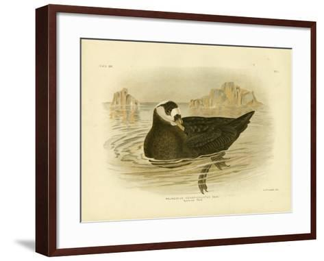 Spectacled Petrel, 1891-Gracius Broinowski-Framed Art Print