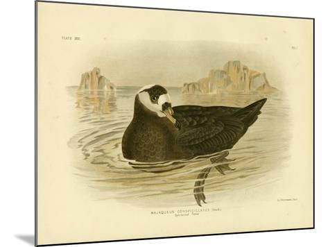 Spectacled Petrel, 1891-Gracius Broinowski-Mounted Giclee Print