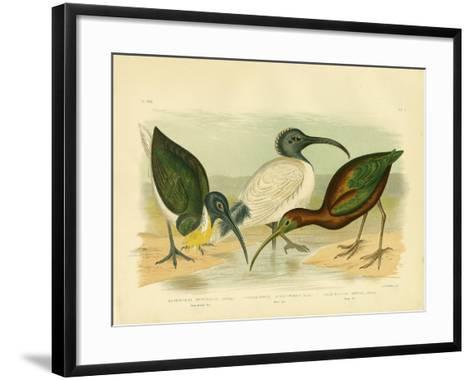 Straw-Necked Ibis, 1891-Gracius Broinowski-Framed Art Print